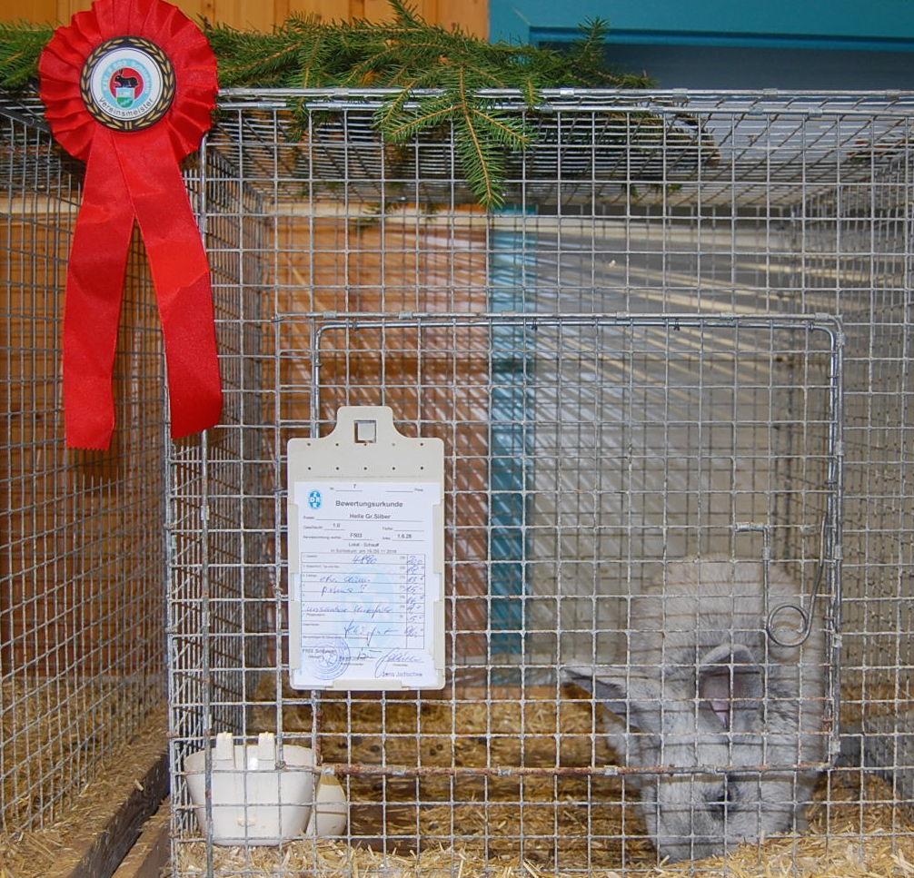 kaninchenausstellung-schliekum-005-kopie